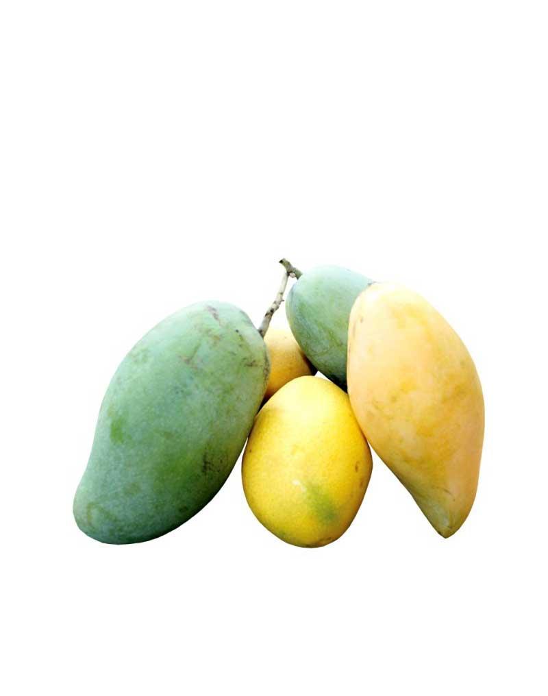 mango-sri-lanka